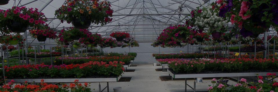 Votre Horticulteur & producteur dans les Landes