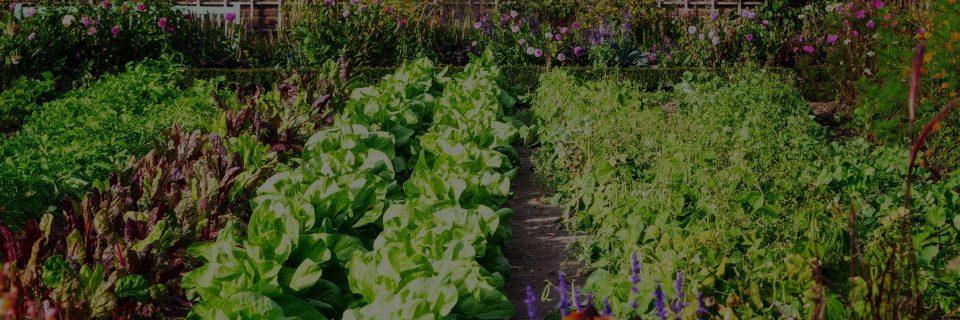 Nous sélectionnons les meilleurs légumes